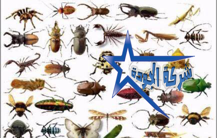 رش مبيدات بالرياض - القضاء على الحشرات الطائرة والزاحفة بجميع انواعها 0559890926